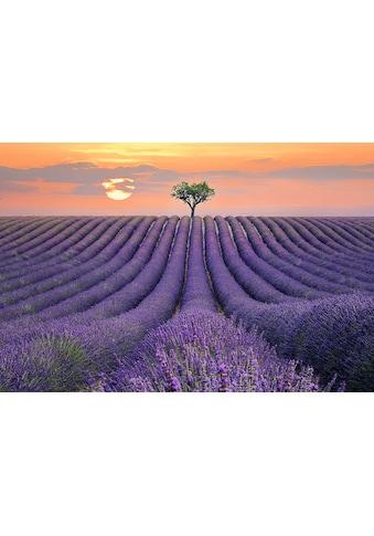 Home affaire Leinwandbild »LEE SIE / Lavendelfeld«, (1 St.) kaufen
