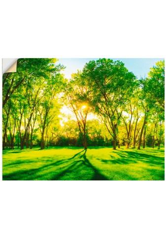 Artland Wandbild »Frühlingswärme II«, Wiesen & Bäume, (1 St.), in vielen Größen &... kaufen