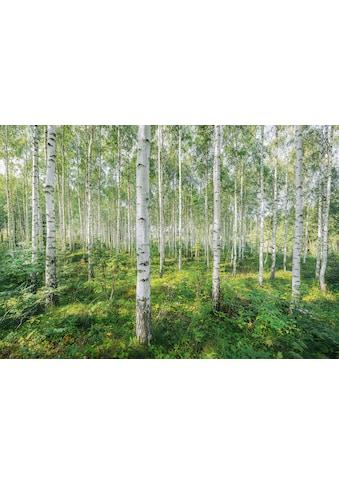 Komar Fototapete »Sunny Day«, bedruckt-Wald-geblümt, ausgezeichnet lichtbeständig kaufen