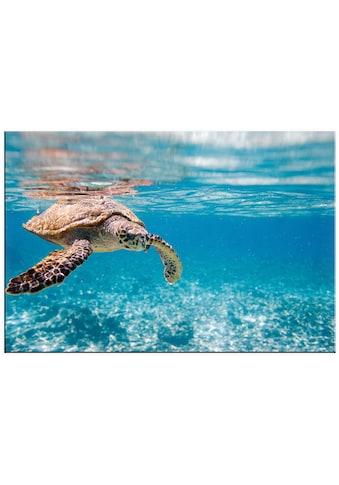 Home affaire Acrylglasbild »Schildkröte auf Reisen« kaufen
