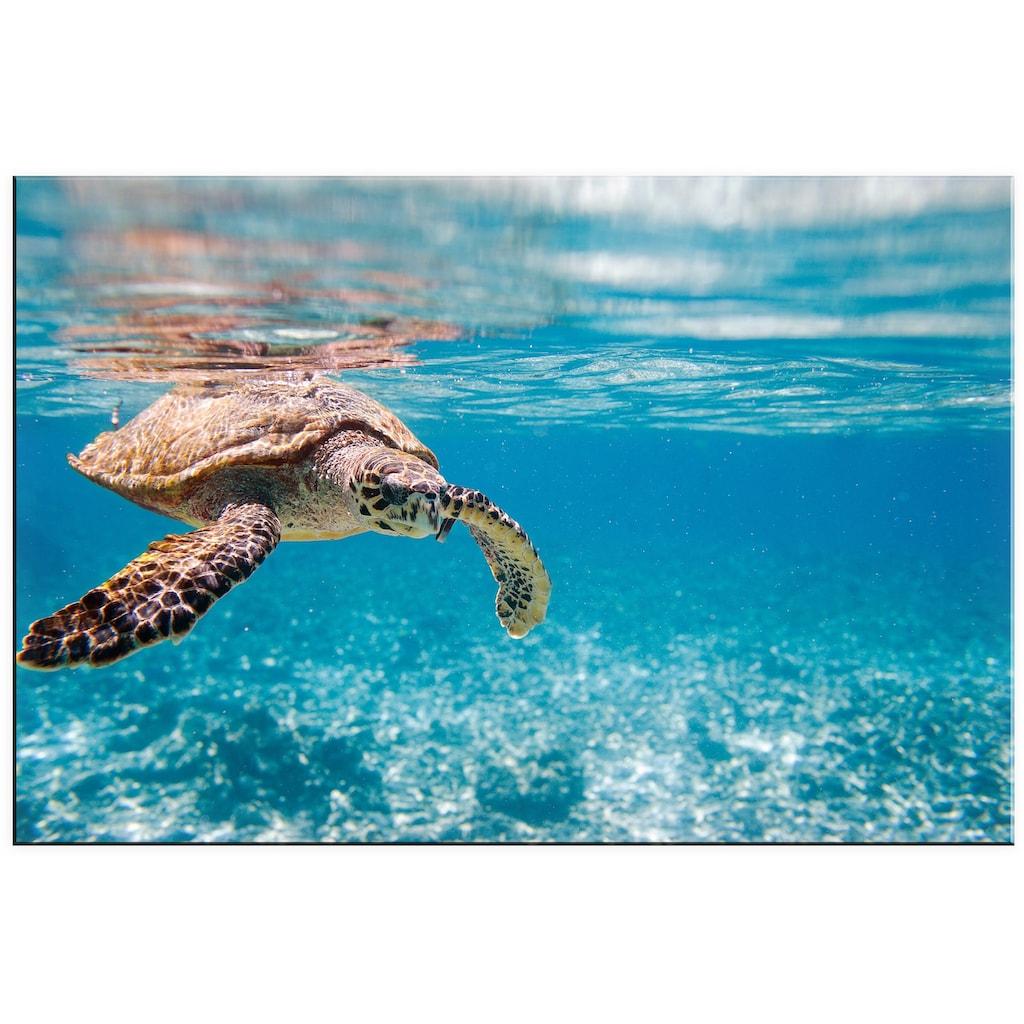 Wall-Art Acrylglasbild »Schildkröte auf Reisen«