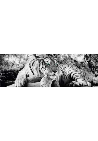 Home affaire Deco - Panel »Tiger guckt dich an« kaufen