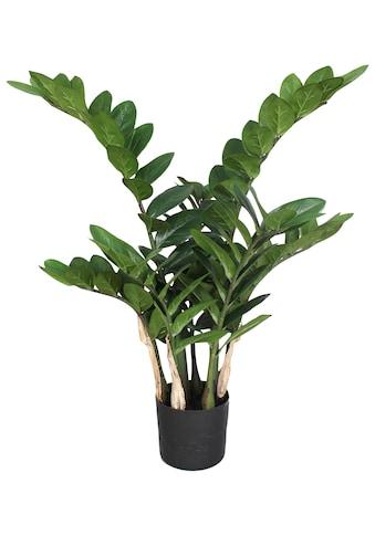 Creativ green Kunstpflanze »Zamifolia« kaufen