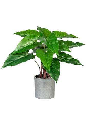 Creativ green Künstliche Zimmerpflanze »Anthurium«, im Melamintopf kaufen
