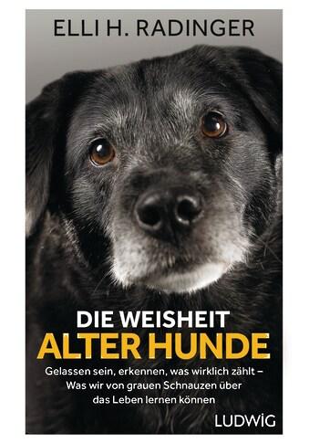 Buch »Die Weisheit alter Hunde / Elli H. Radinger« kaufen