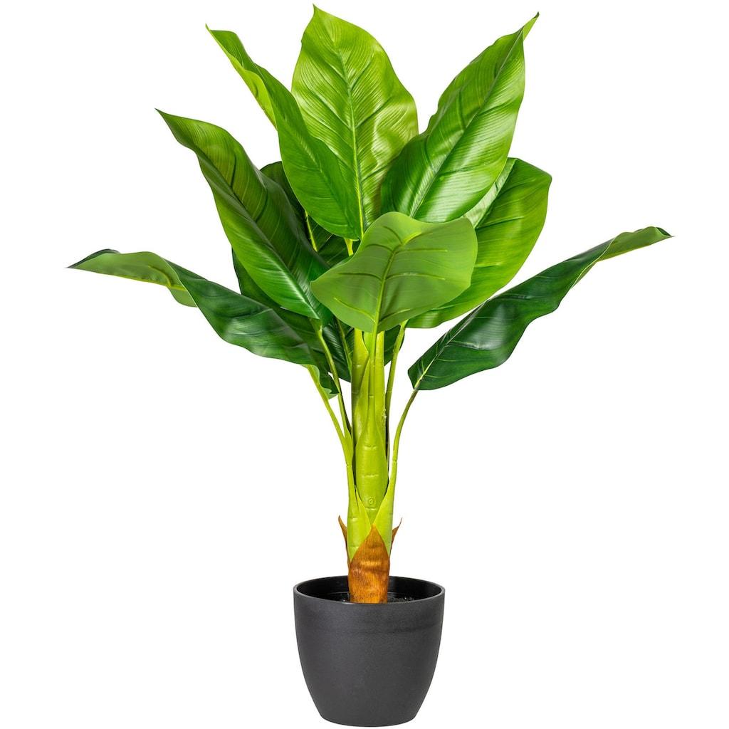 my home Künstliche Zimmerpflanze »Sammy«