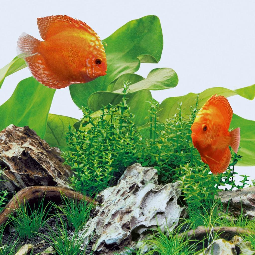 JUWEL AQUARIEN LED Aquariumleuchte »Day 9000K«, Kaltweiß