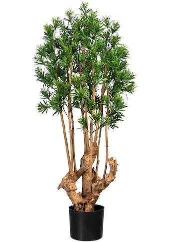 Creativ green Künstliche Zimmerpflanze »Podocarpus macrophyllus« kaufen
