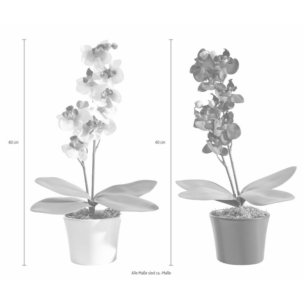 Creativ green Kunstpflanze, im Keramiktopf, 2er-Set