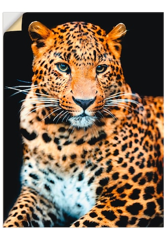 Artland Wandbild »Wütender wilder Leopard«, Wildtiere, (1 St.), in vielen Größen &... kaufen