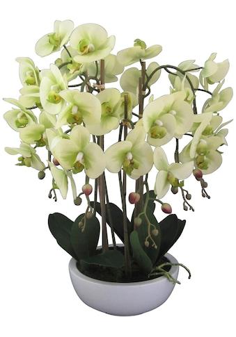Creativ green Kunstpflanze »Orchidee Phalaenopsis«, in Keramikschale kaufen