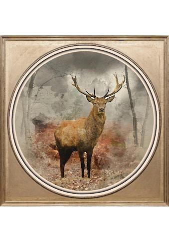 queence Acrylglasbild »Hirsch« kaufen