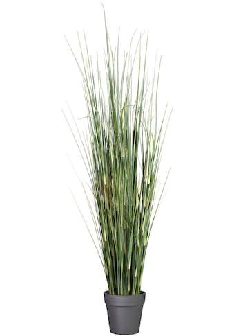 Creativ green Kunstgras »Equisetumgras«, im Kunststofftopf kaufen
