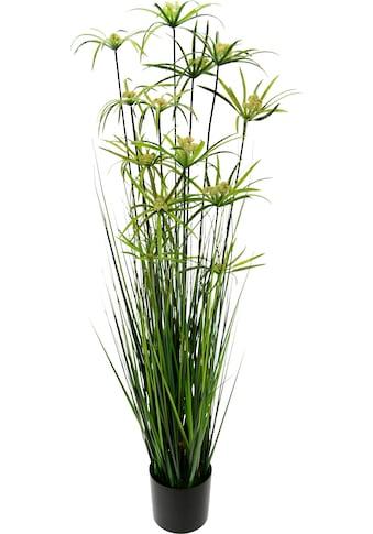 I.GE.A. Kunstpflanze »Zyperngras im Topf« kaufen