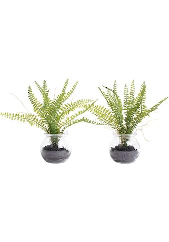 Botanic-Haus Künstliche Zimmerpflanze »Farn im Glas« kaufen