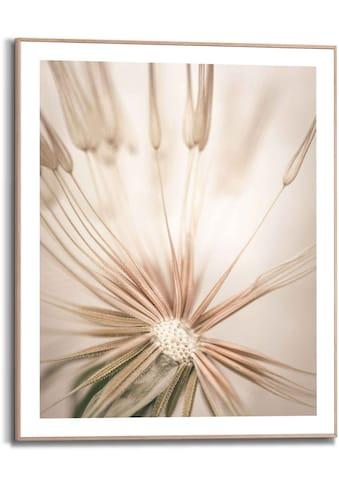Reinders! Bild »Pusteblume Löwenzahn - Nahaufnahme - Natur«, (1 St.) kaufen