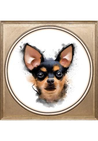 queence Acrylglasbild »Chihuahua« kaufen