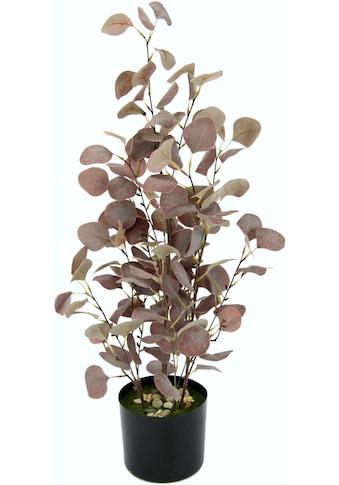 I.GE.A. Kunstpflanze »Eukalyptuspflanze«, im Kunststofftopf kaufen