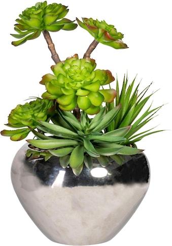 Creativ green Kunstpflanze »Sukkulenten« kaufen