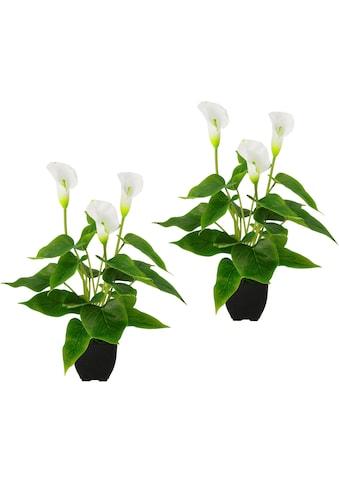 I.GE.A. Kunstpflanze »Callapflanze« kaufen