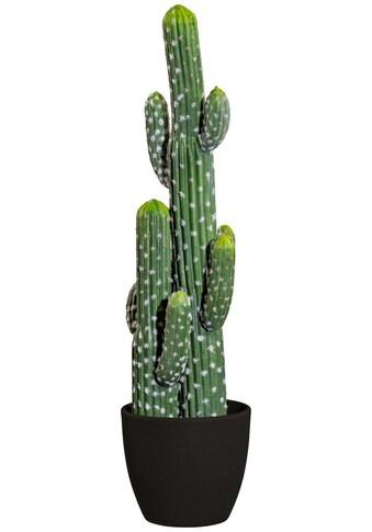 Creativ green Kunstpflanze »Kaktus Mexiko« (1 Stück) kaufen