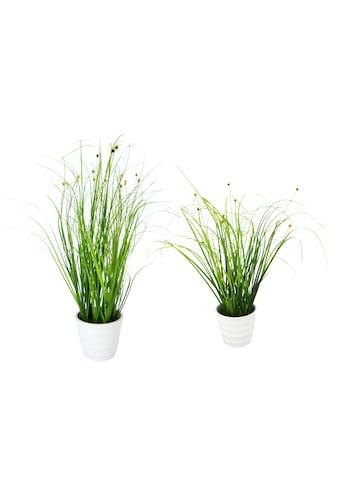 I.GE.A. Kunstpflanze »Grasbusch«, 2er Set kaufen