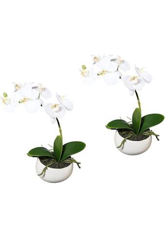 Creativ green Kunstorchidee »Phalaenopsis«, 2er Set, in Keramikschale kaufen