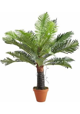 Creativ green Kunstpalme »Baumfarn« kaufen