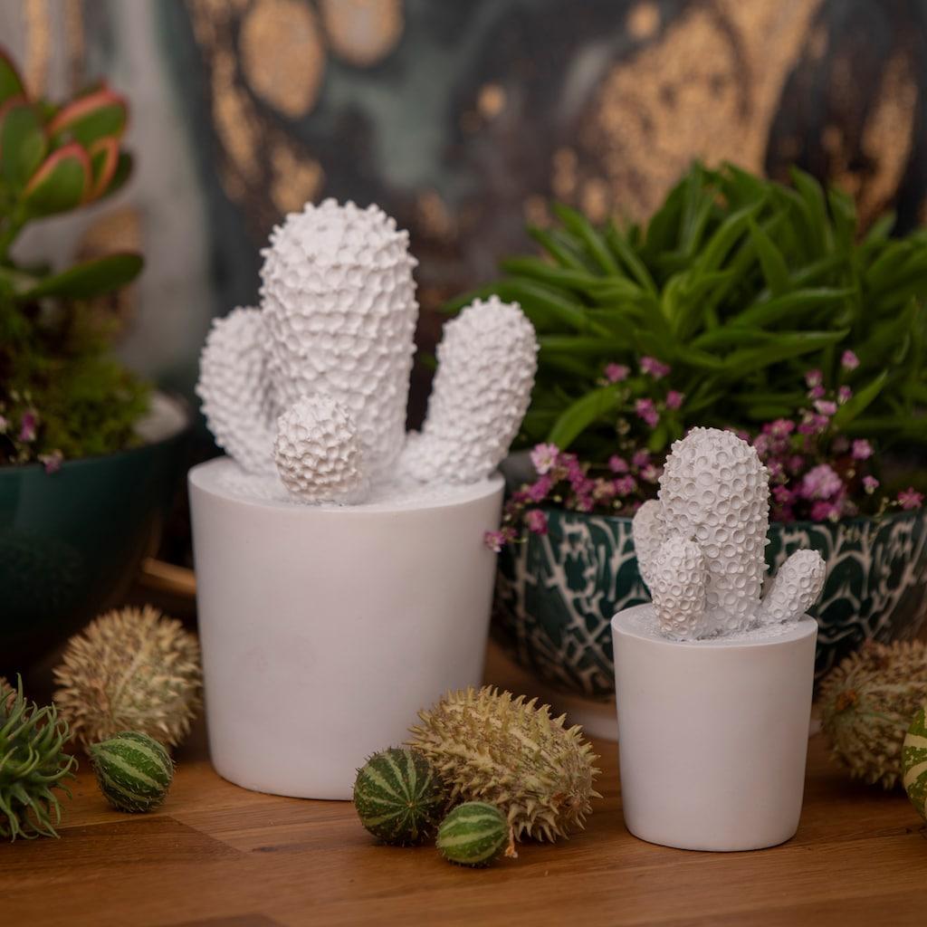 VALENTINO Wohnideen Dekoobjekt »Kaktus« (Set, 2 Stück, 1x breit, 1x schmal)