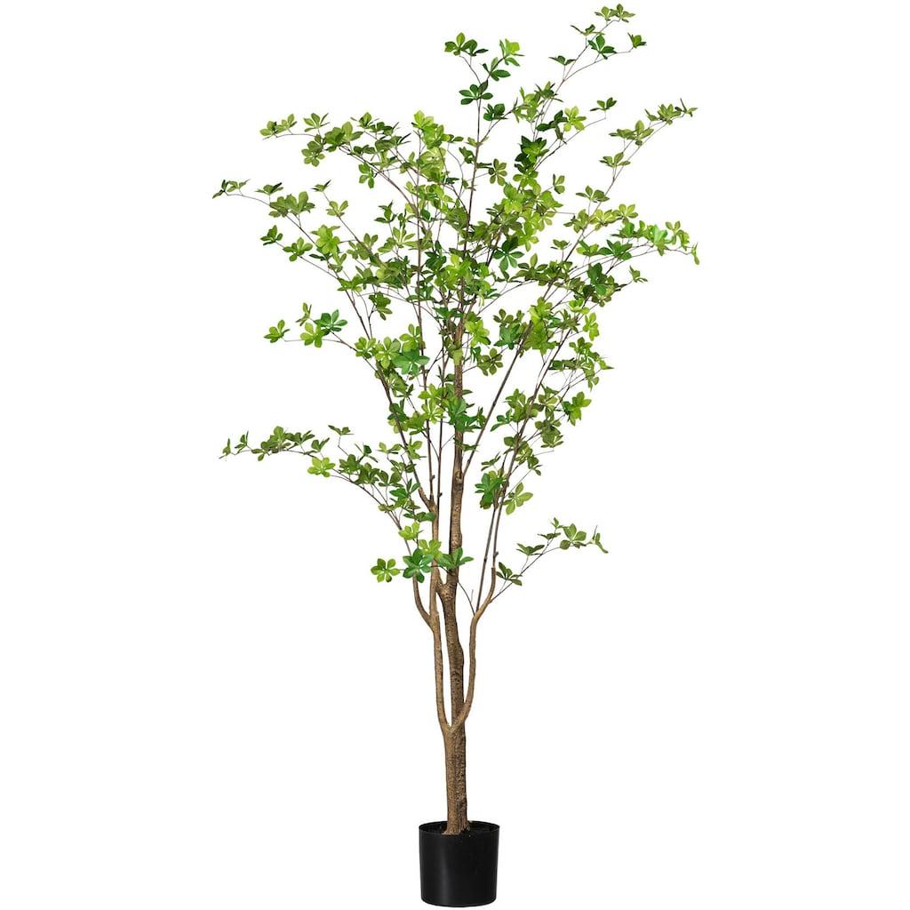 Creativ green Kunstbaum »Louisiana-Baum«