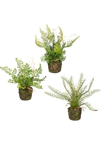 Creativ green Künstliche Zimmerpflanze »Set aus Farnpflanzen auf Wurzelballen«, 3er Set kaufen