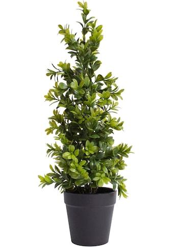 Botanic-Haus Künstliche Zimmerpflanze »Buchsbaum im Topf« kaufen