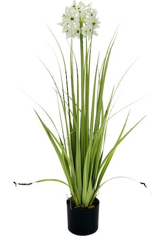 I.GE.A. Kunstblume, im Topf kaufen