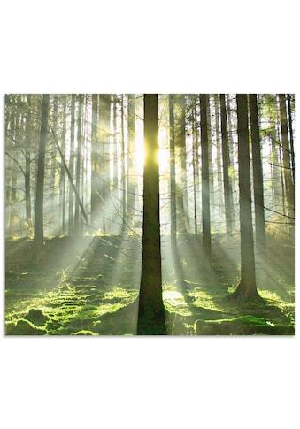 Artland Küchenrückwand »Wald im Gegenlicht«, selbstklebend in vielen Größen -... kaufen