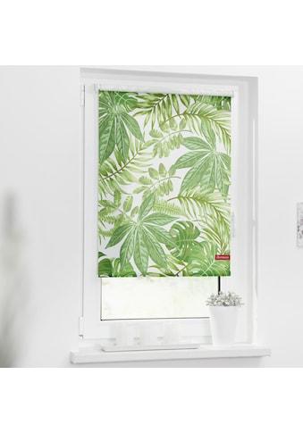 LICHTBLICK ORIGINAL Seitenzugrollo »Rollo Klemmfix, ohne Bohren, blickdicht, Blätter -... kaufen
