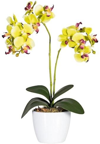 Creativ green Kunstpflanze »Phalaenopsis« kaufen
