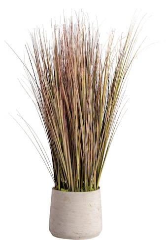 Blütenwerk Künstliche Zimmerpflanze »Sylt«, im Fiberstone-Übertopf kaufen