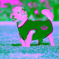 WeatherBeeta Hundemantel »Fleece mit Reißverschluss«, Polyester, (1)