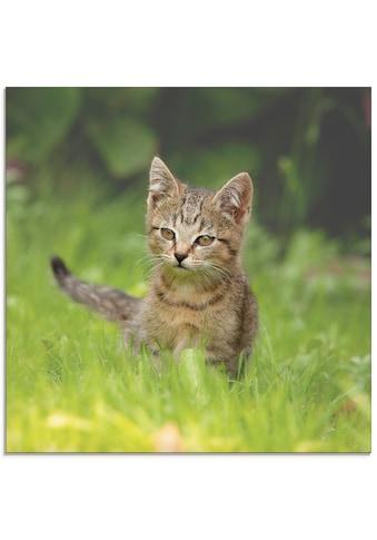 Artland Glasbild »Kleiner Tiger im Gras«, Haustiere, (1 St.) kaufen