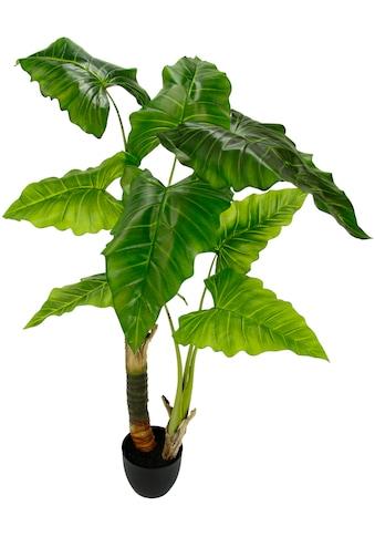 I.GE.A. Kunstpflanze »Blattpflanze«, im Kunststofftopf kaufen