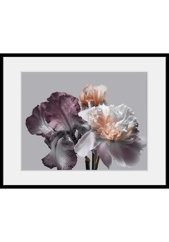 queence Bild »Vesna«, Blumen, (1 St.) kaufen