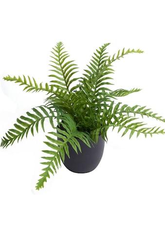 Botanic-Haus Künstliche Zimmerpflanze »Farn im Topf« kaufen