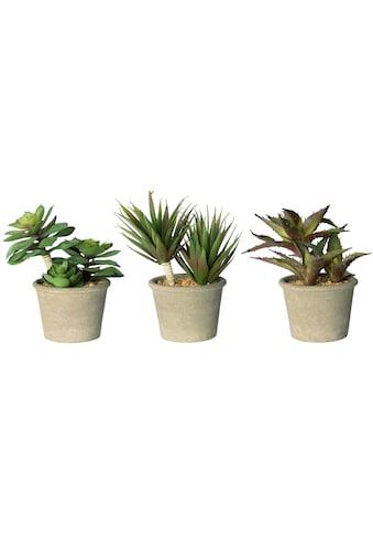 my home Künstliche Zimmerpflanze »Romina«, 3er Set kaufen