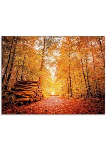 Artland Glasbild »Herbstlandschaft«, Vier Jahreszeiten, (1 St.) kaufen