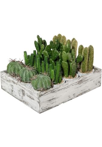 Creativ green Kunstkaktus »Kaktus« (12 Stück) kaufen