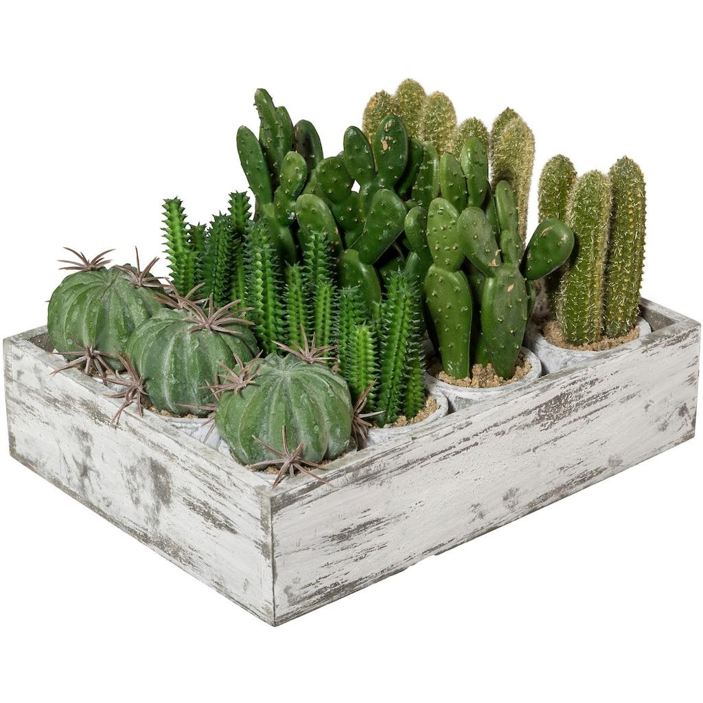 Creativ green Kunstkaktus »Kaktus« (12 Stück)