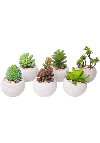 Botanic-Haus Kunstkaktus »Sukkulenten« kaufen