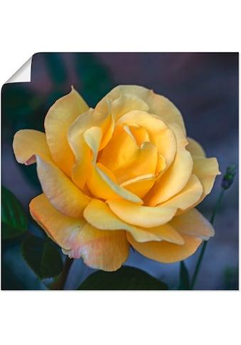Artland Wandbild »Gelbe Rose«, Blumen, (1 St.), in vielen Größen & Produktarten -... kaufen