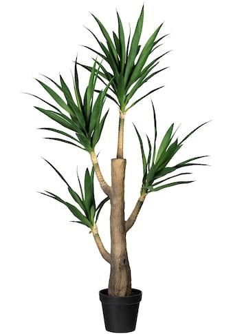 Creativ green Künstliche Zimmerpflanze »Dracaena fragans«, im Zementtopf kaufen