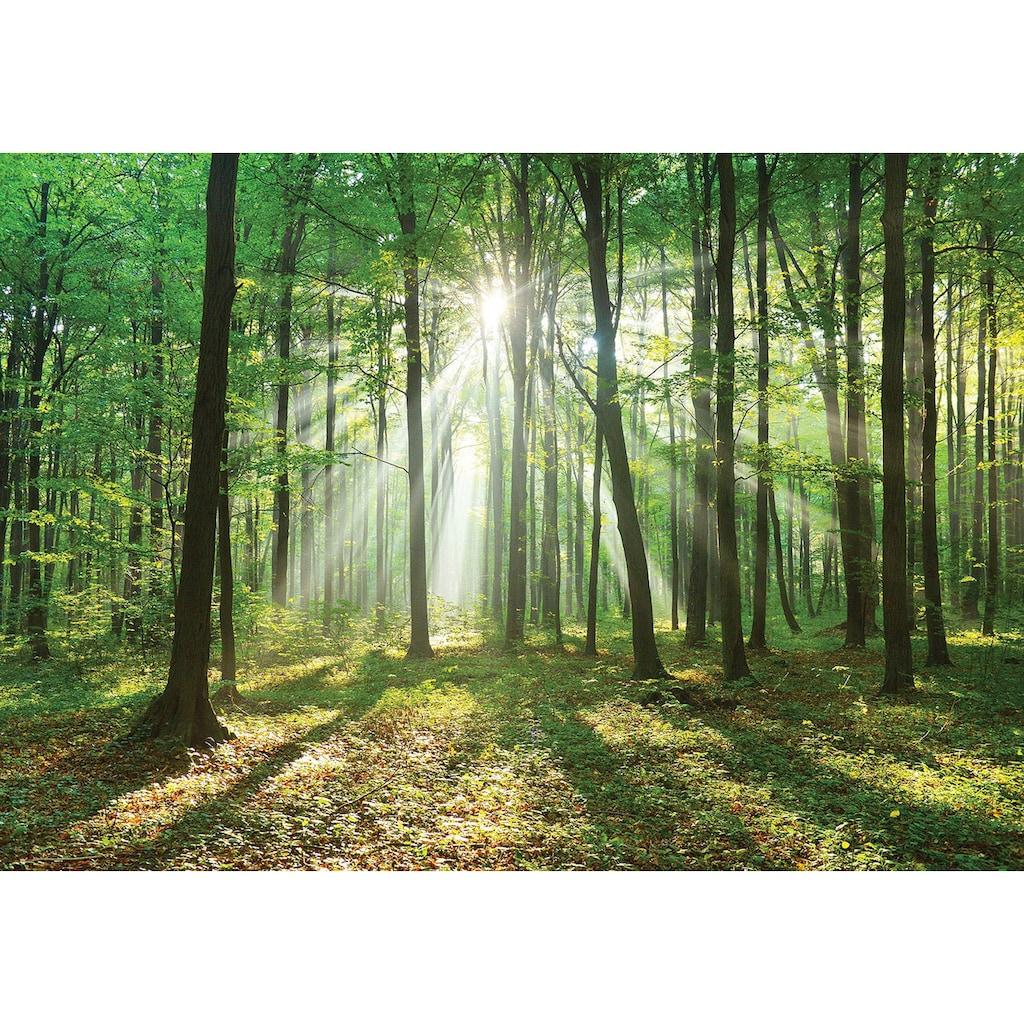 Consalnet Vliestapete »Wald in der Sonne«, verschiedene Motivgrößen, für die Küche